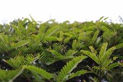 绿色顶面树纹理背景 免版税库存照片