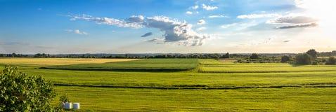 绿色领域乡下全景  免版税库存图片