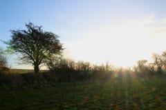 绿色领域和一棵树在12月阳光下 免版税库存图片