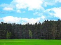 绿色领域和木头 库存照片