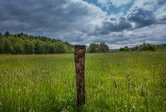 绿色领域和森林在阳光下 库存照片