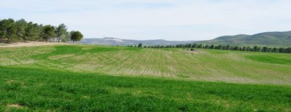 绿色领域和草甸全景在春天 免版税库存图片