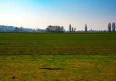 绿色领域和蓝天在早期的春天 免版税库存照片
