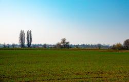 绿色领域和蓝天在早期的春天 库存照片