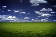 绿色领域和蓝天 图库摄影