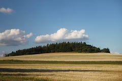 黄色领域和绿色树 库存图片