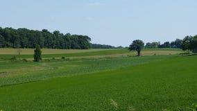 绿色领域在夏天 免版税库存图片