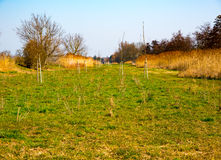 绿色领域在早期的春天 库存图片