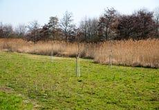 绿色领域在早期的春天 免版税库存照片
