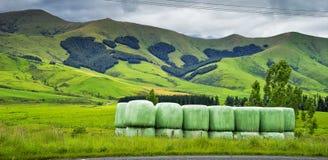 绿色领域新西兰风景  免版税库存照片