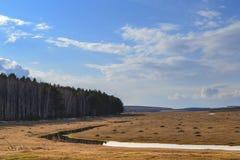黄色领域早期的春天 库存照片