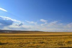 黄色领域早期的春天 免版税库存照片
