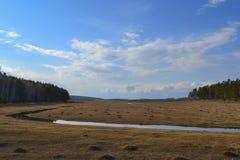 黄色领域早期的春天 库存图片