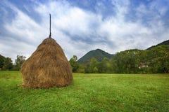 绿色领域的干草堆 免版税库存照片