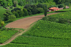 绿色领域的红色房子 库存图片