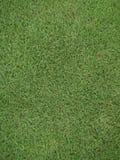 绿色领域背景在操场 库存图片