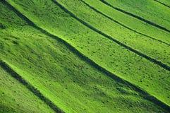绿色领域背景,春天题材 免版税库存照片