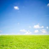 绿色领域草和天空 免版税图库摄影