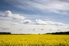黄色领域 库存图片