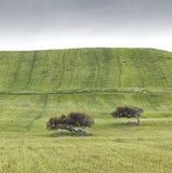 绿色领域 免版税库存照片