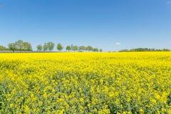 黄色领域 免版税库存图片