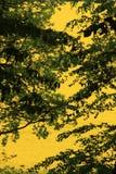 黄色颜色闪光 免版税库存图片