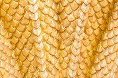 黄色颜色龙纹理 免版税库存图片