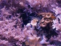 紫色颜色水下的海洋生活 免版税库存图片