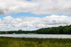 绿色风景在公园 库存照片