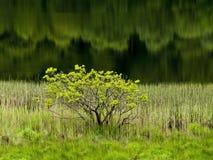 绿色风景 库存图片
