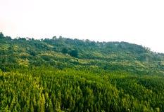 绿色风景 库存照片