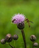 黄色飞行和一只蚂蚁在花 图库摄影