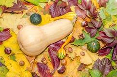 黄色饼南瓜和婴孩南瓜在色的秋叶用栗子和橡子 免版税图库摄影