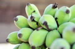 绿色香蕉。 免版税库存图片