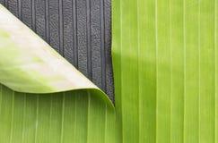 绿色香蕉叶子和橡胶标号背景摘要 图库摄影