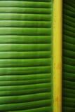 绿色香蕉叶子特写镜头 图库摄影