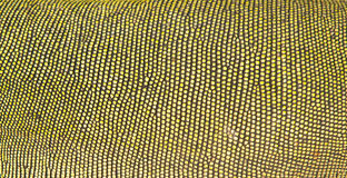 绿色鬣鳞蜥皮肤 图库摄影
