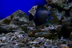 黑色鱼 图库摄影