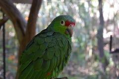 绿色鸟 免版税库存照片