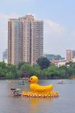 黄色鸭子在紫竹公园在北京 免版税库存图片