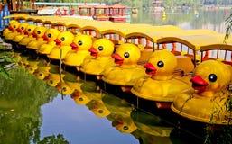 黄色鸭子队列 库存照片
