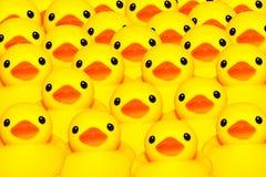 黄色鸭子 图库摄影