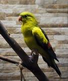 绿色鹦鹉坐在分支画象 免版税库存照片