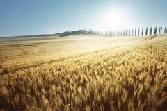黄色麦田和农厂房子,托斯卡纳 免版税库存照片