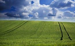 绿色麦田在惊人的cloudscape的 免版税库存图片