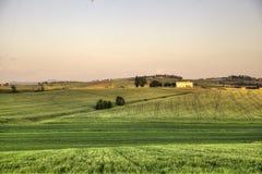 绿色麦田在7月-托斯卡纳 库存照片