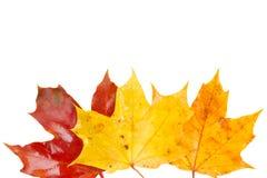 黄色,橙色和红色秋天叶子边界  免版税库存图片
