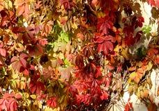 黄色,橙色,红色秋叶作为背景 免版税库存照片