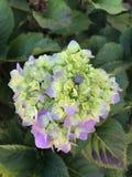 绿色,白色和紫色植物 库存照片