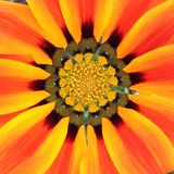 黄色,红橙色花 库存照片
